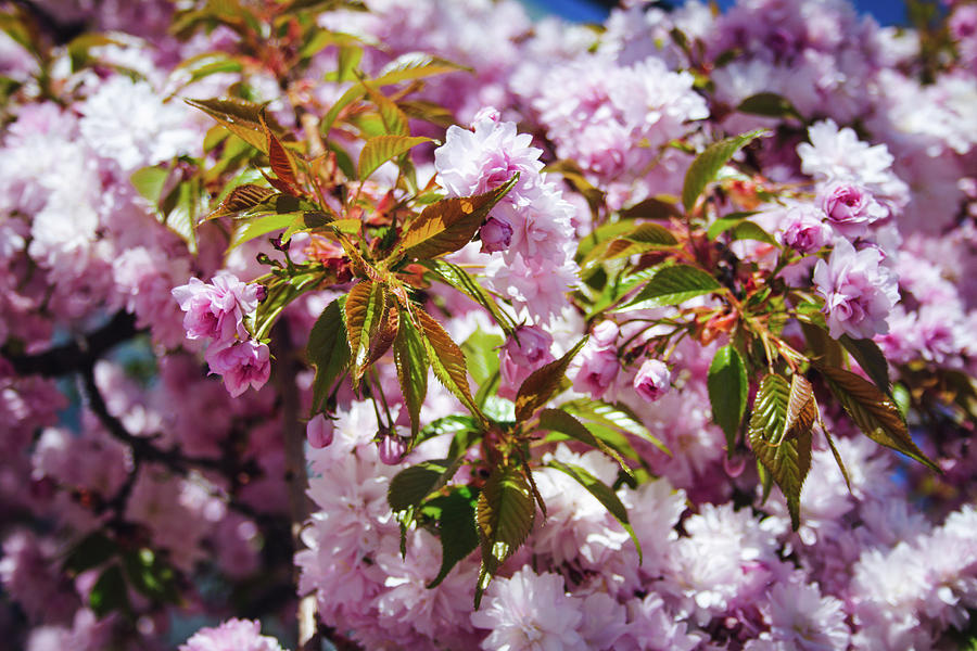 Beautiful Pink Toned Floral Arrangement Spring Flowers Photograph
