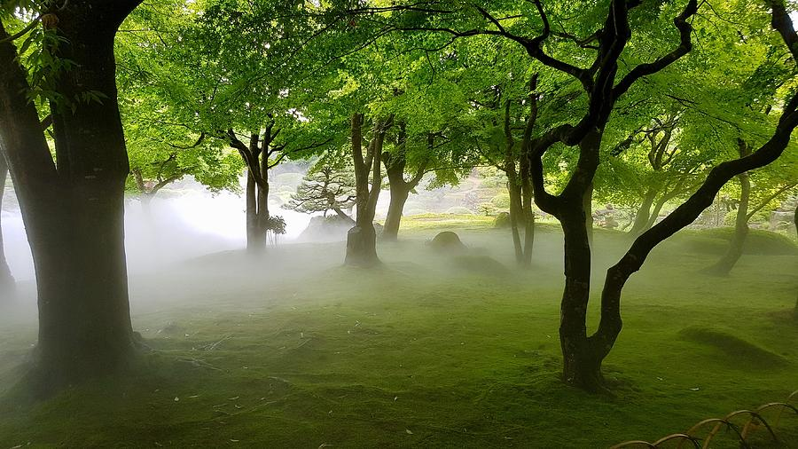 Beautiful Shot Of A Grassy Field With Trees In A Fog Photograph By Marvin Solorzano