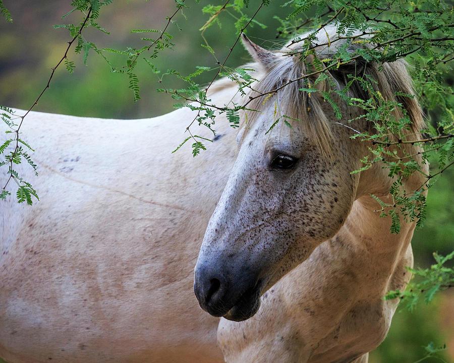 Beautiful White Wild Horse Closeup by Susan Schmitz