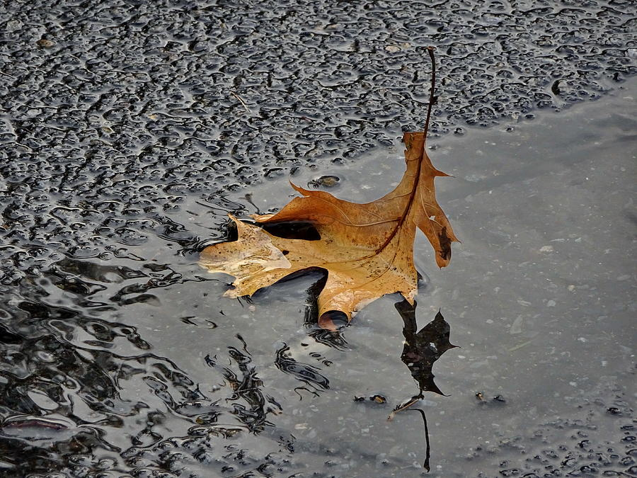 Fall Photograph - Beauty In Wilting by Lyuba Filatova