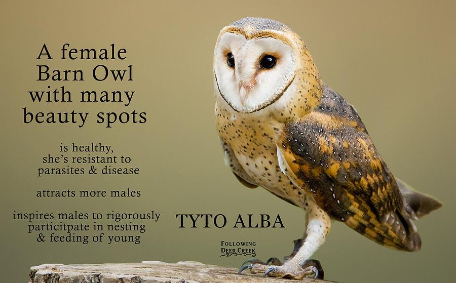 Barn Owl Digital Art - Beauty Spots by Lisa Redfern