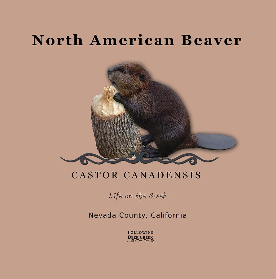 Beaver by Lisa Redfern