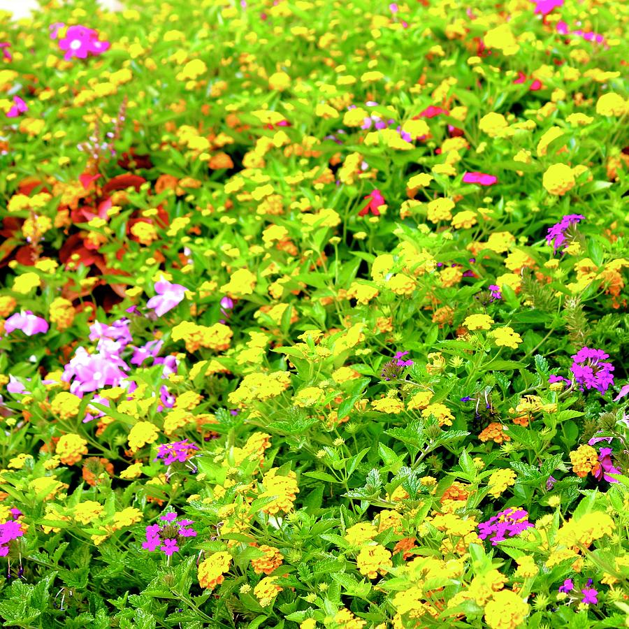 Bed Of Flowers Photograph