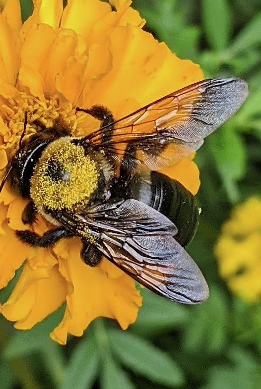 Bee Candy Photograph