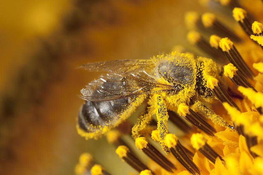 Bee Photograph by JLGutierrez
