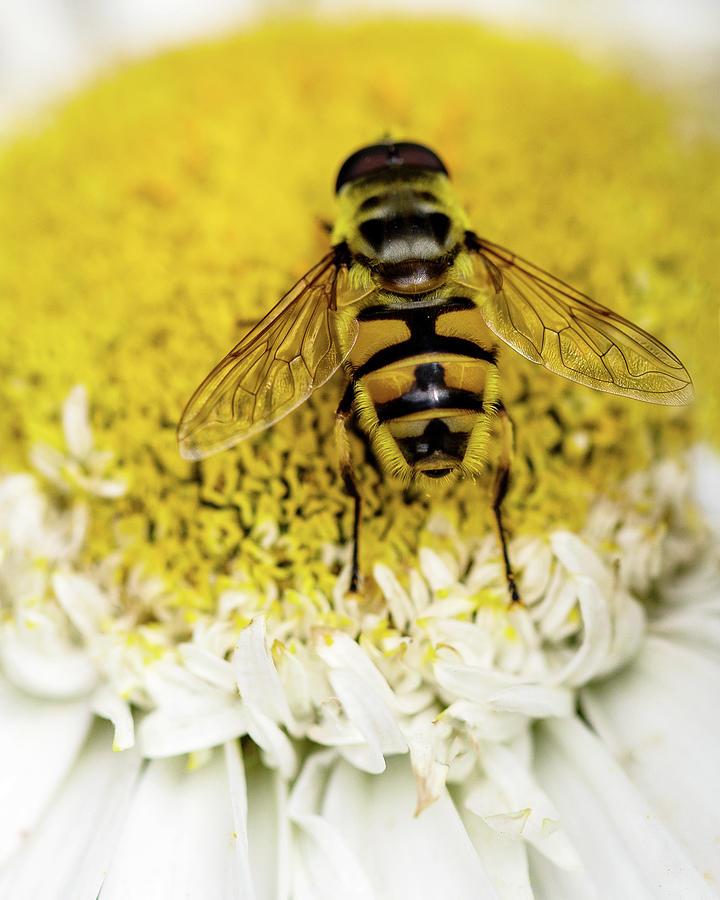Bee Very Close Photograph