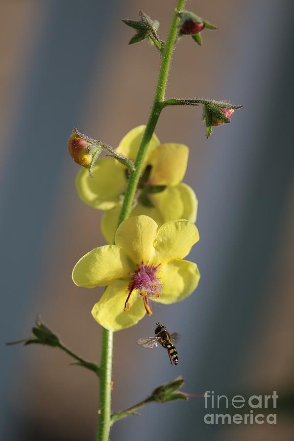Bee With Yellow Flower Photograph
