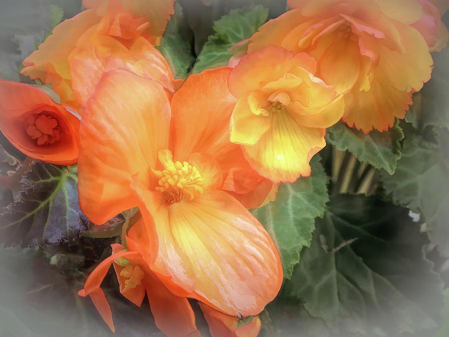 Begonia Cluster by Lynda Lehmann