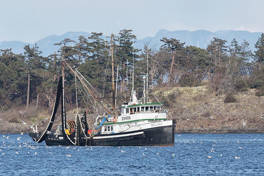Belina In Northwest Bay Photograph