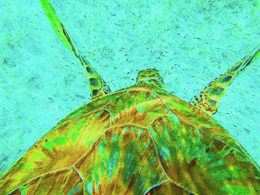Belize Turtle Impressionism by Island Hoppers Art