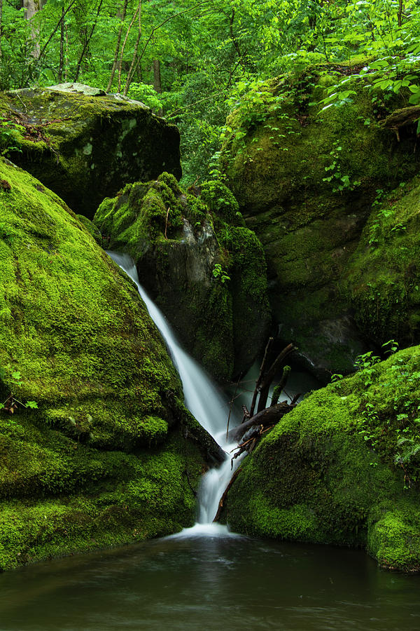 Great Smoky Mountains National Park Photograph - Below 1000 Drips 1 by Melissa Southern