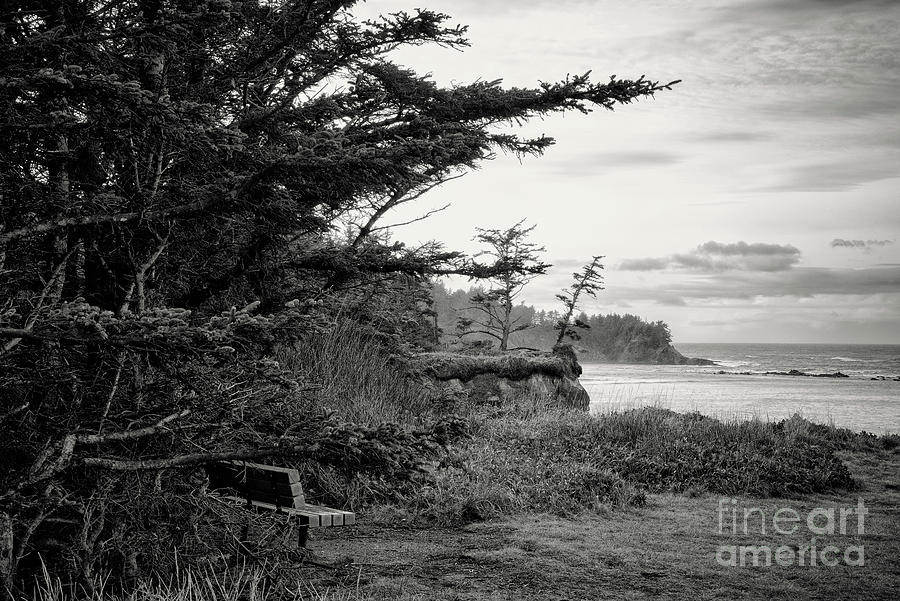 Bench By The Sea Bw Photograph