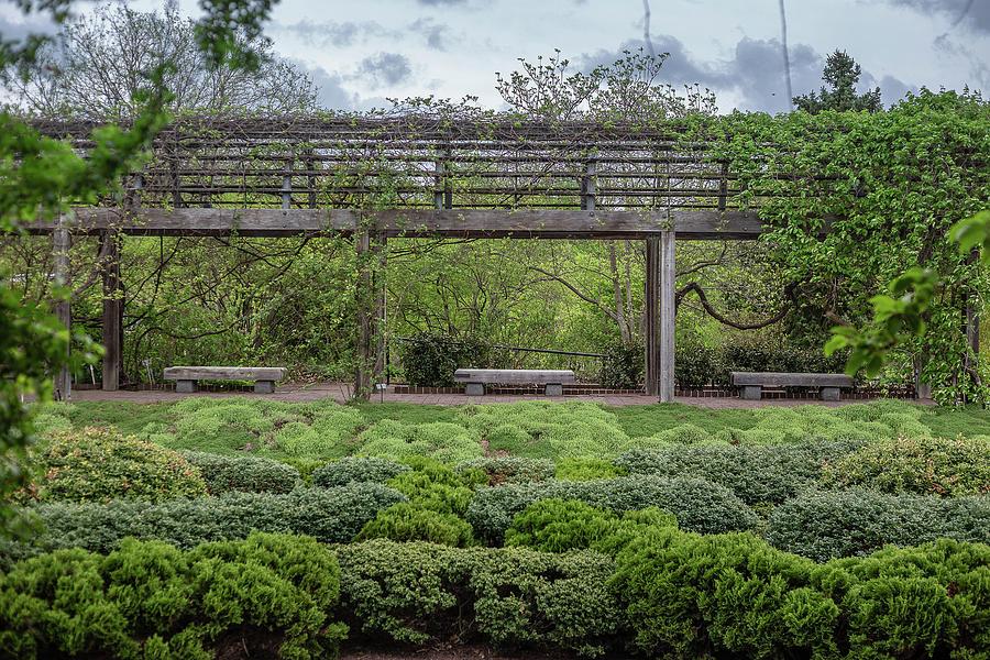 Benches In A Green Garden Photograph
