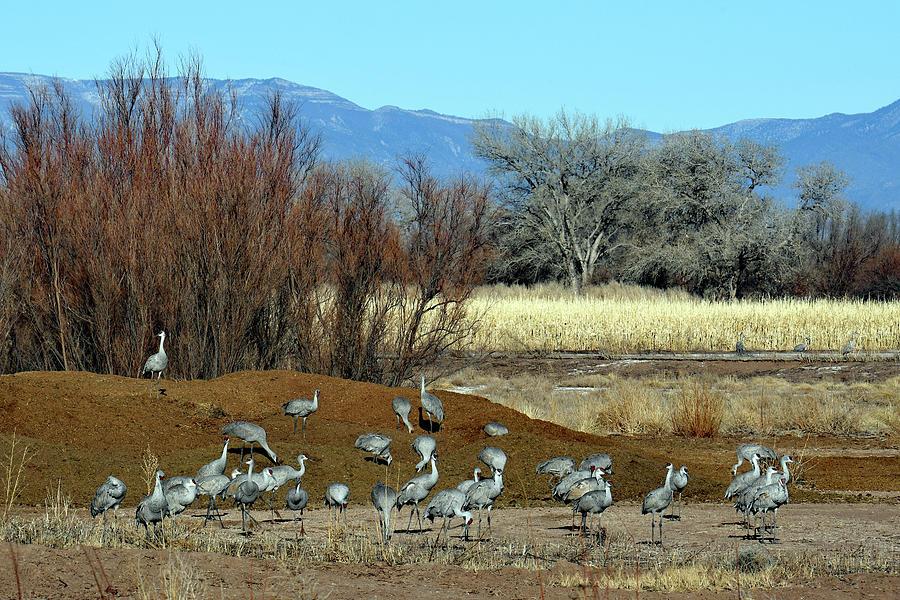 Bernardo Landscape Photograph