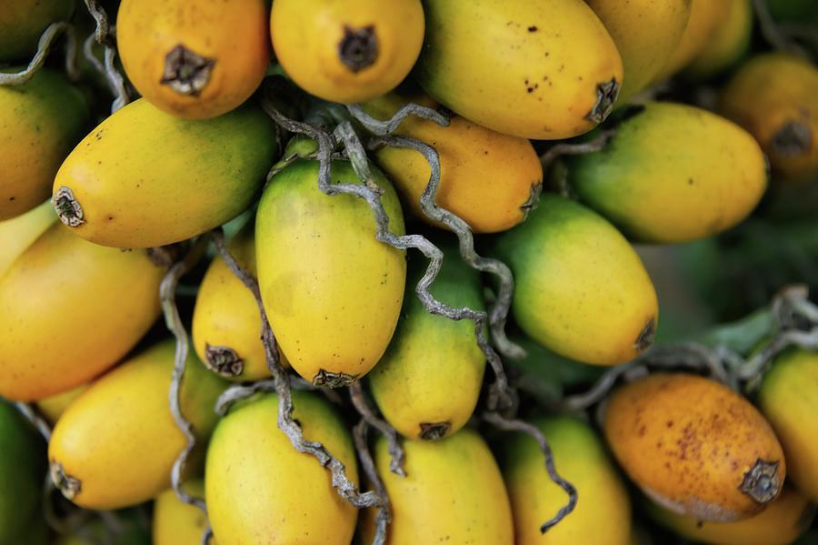 Betel Palm Fruit Photograph