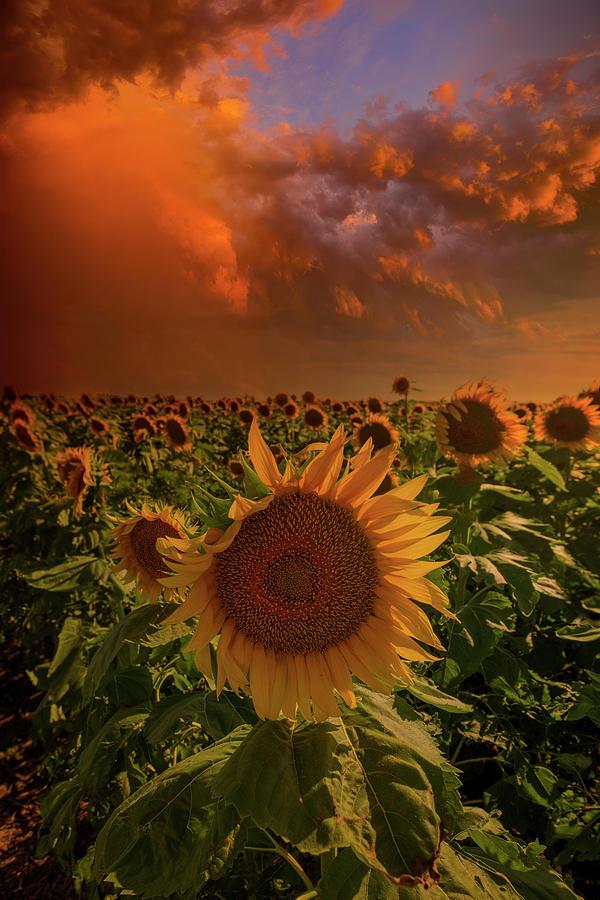 Sunflowers Photograph - Better Days by Aaron J Groen