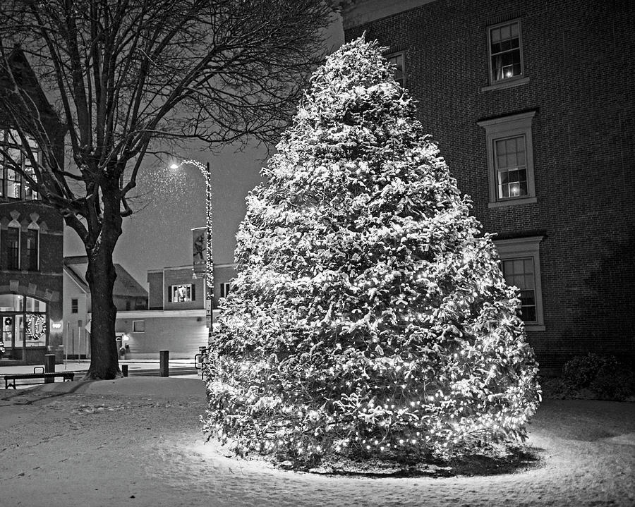 Beverly MA Christmas Tree Downtown Beverly Cabot Street Winter Snowstorm Black and White by Toby McGuire