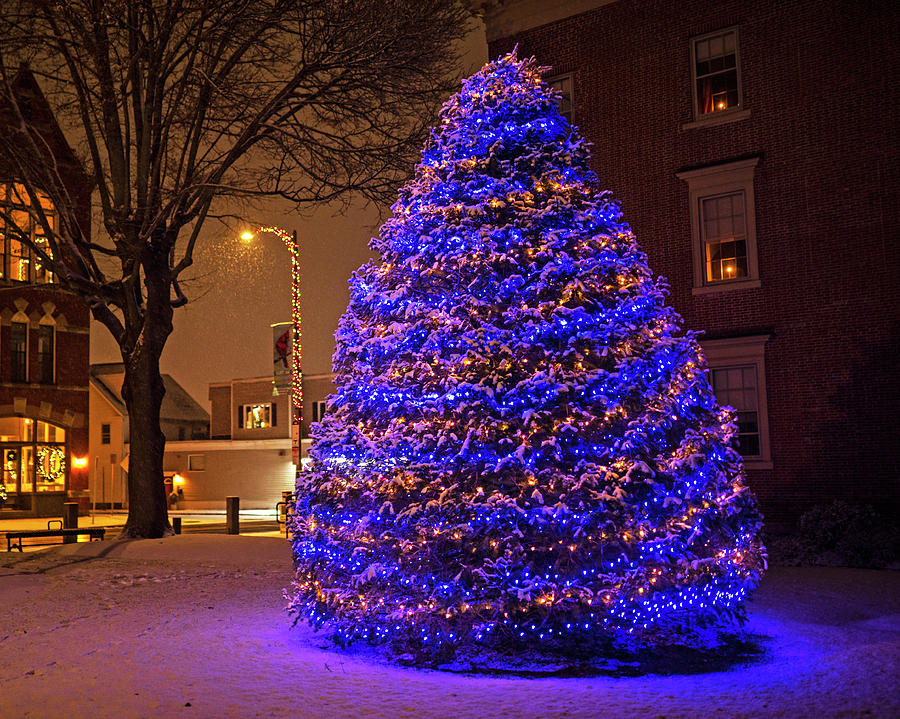 Beverly MA Christmas Tree Downtown Beverly Cabot Street Winter Snowstorm by Toby McGuire
