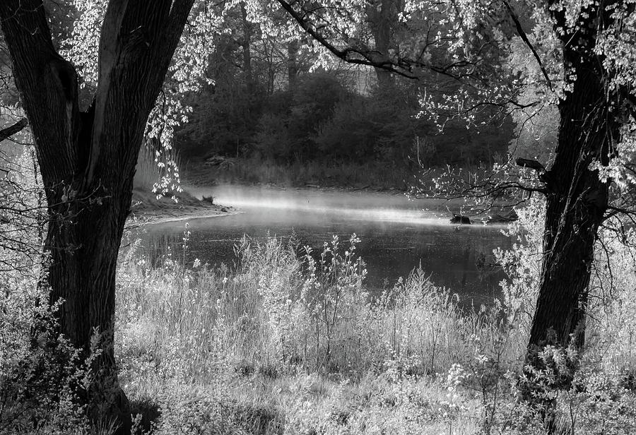 Beyond The Trees - Bw Photograph