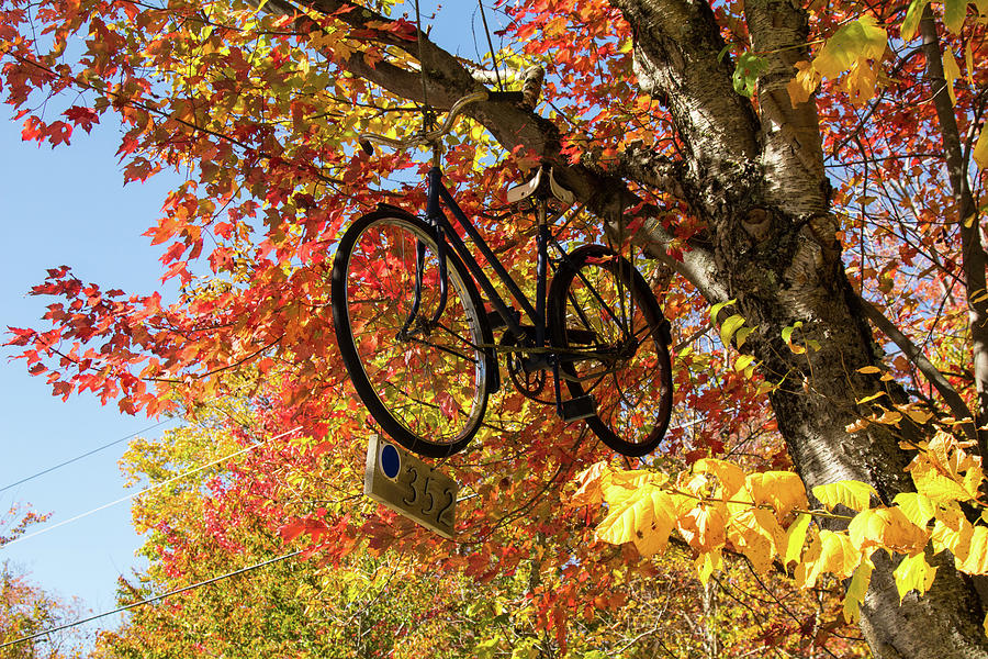 Bicycle road marker in fall by Jeff Folger