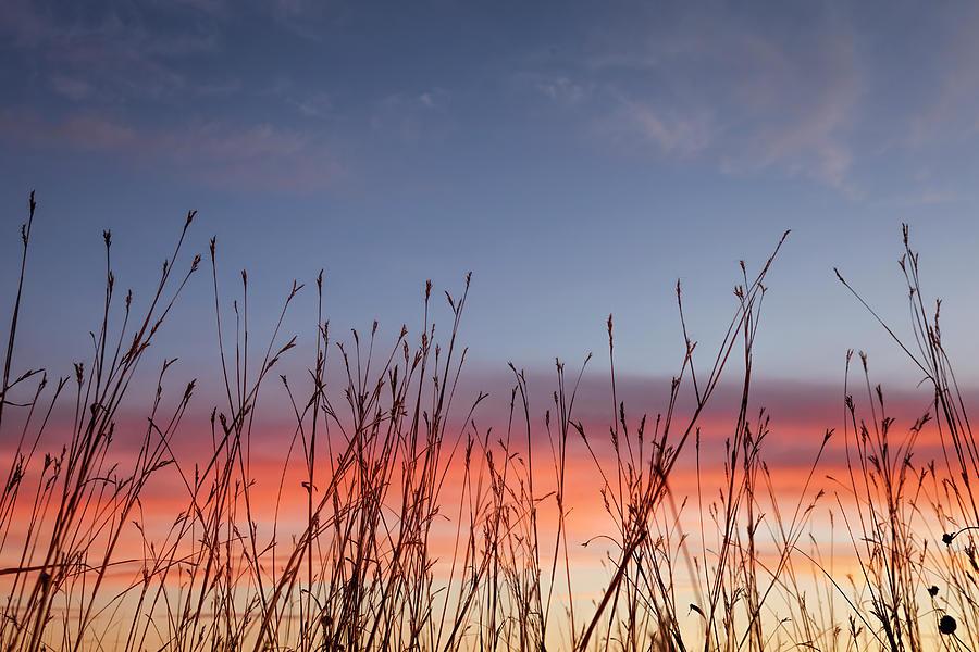 Big Bluestem at Sunset by Scott Bean