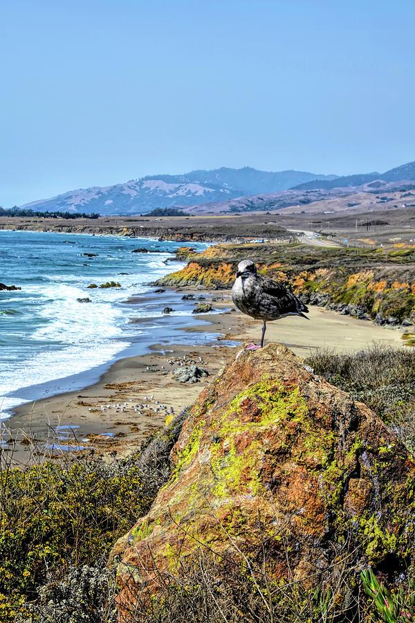 Big Sur Seagull Seascape Photograph
