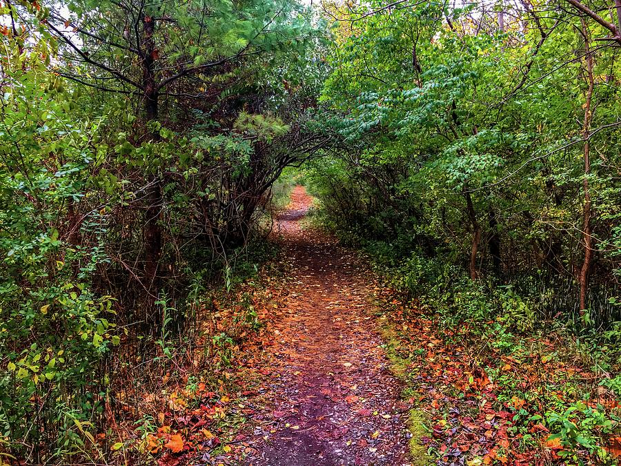 Bike Trail Tree Tunnel IMG_3905 by Michael Thomas