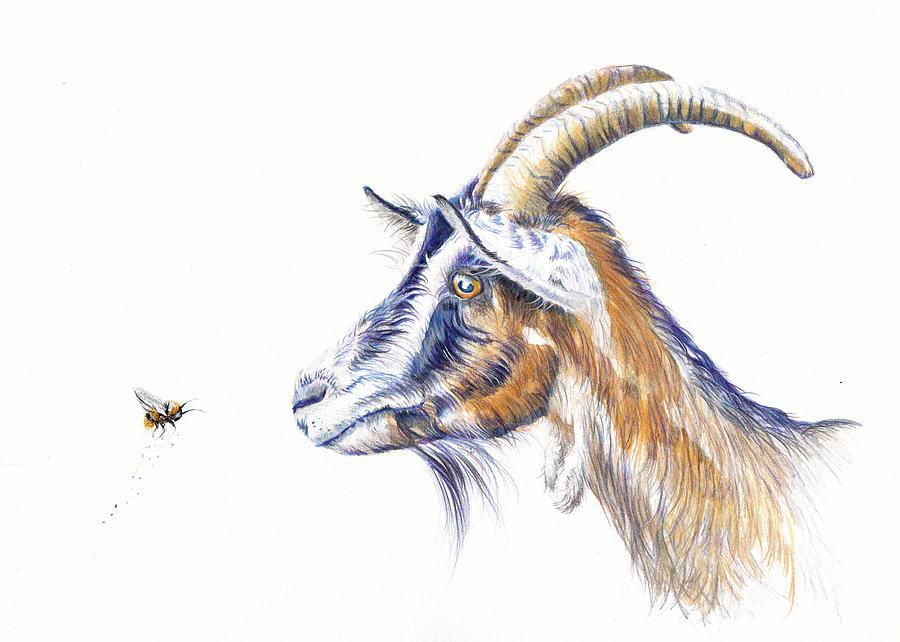 Goat Painting - Billy Goat Gruff by Debra Hall