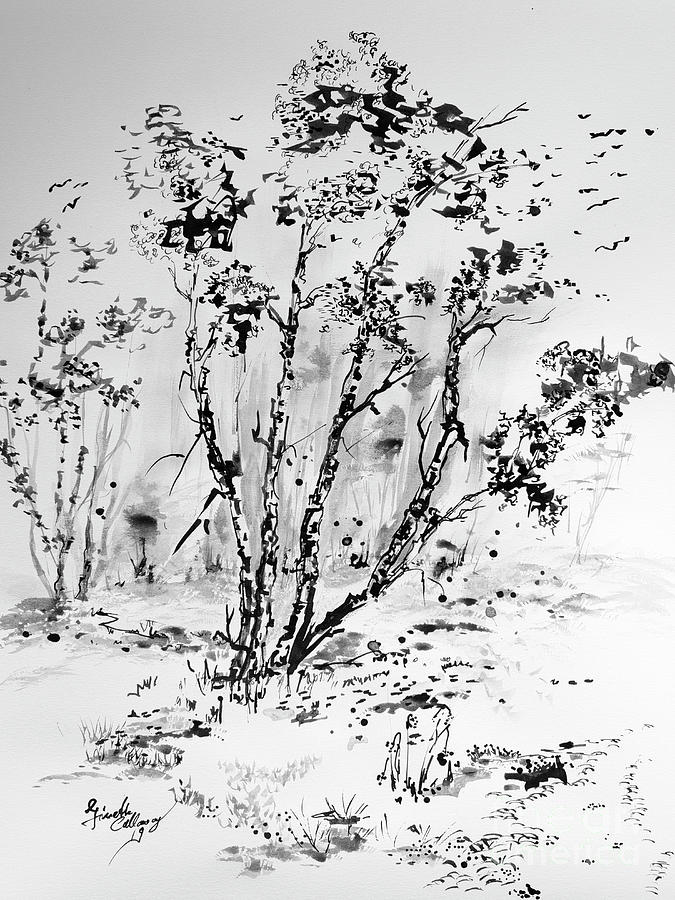Birch Trees Black Ink Drawing by Ginette Callaway