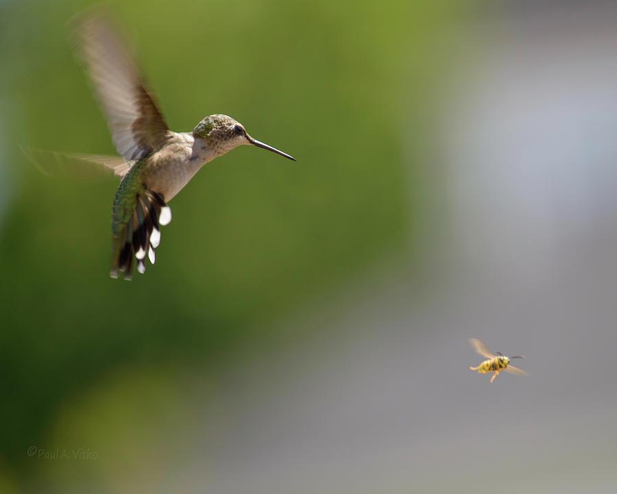 Bird Photograph - Bird And Bee by Paul Vitko