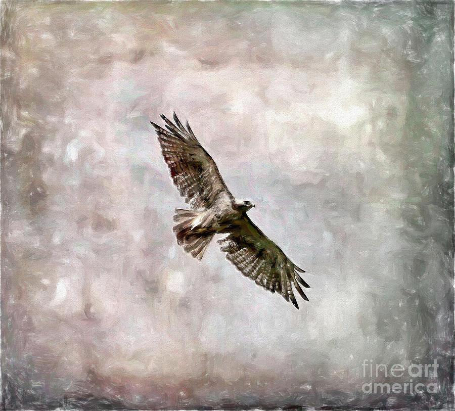 Bird Art - Hawk In Flight Photograph