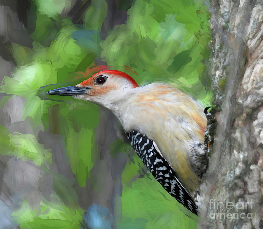 Bird Art - Red-bellied Woodpecker Holds On Photograph