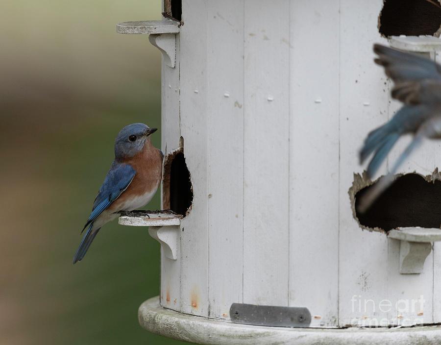 Bird Bird Front Porch Photograph