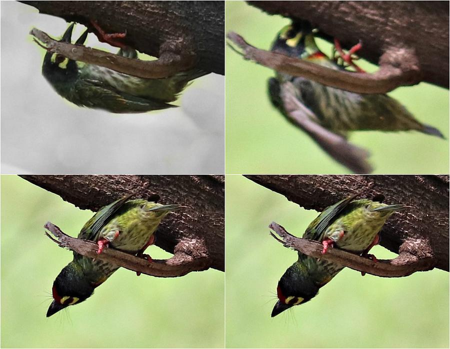 Bird Collage Photograph