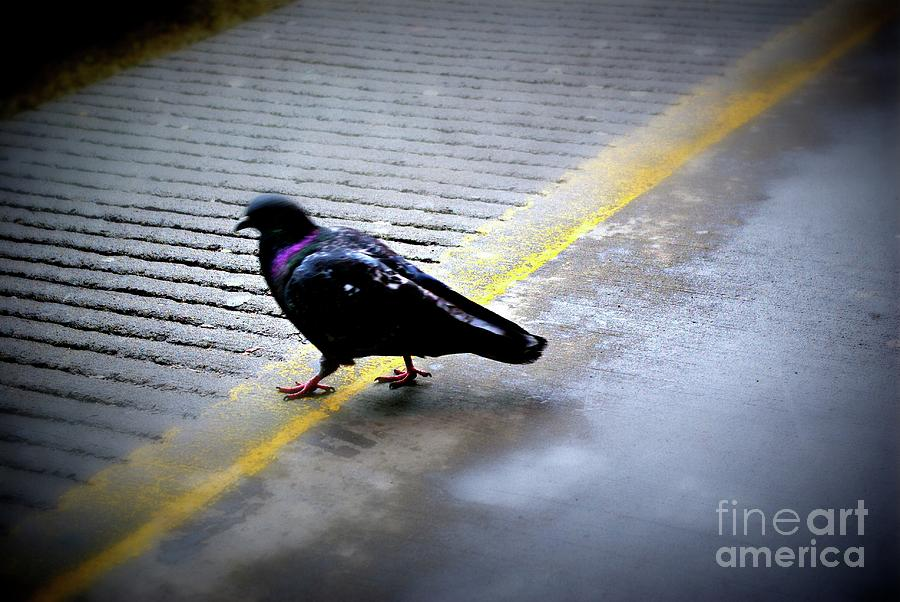 Animal Photograph - Bird Dancing On The Line by Frank J Casella