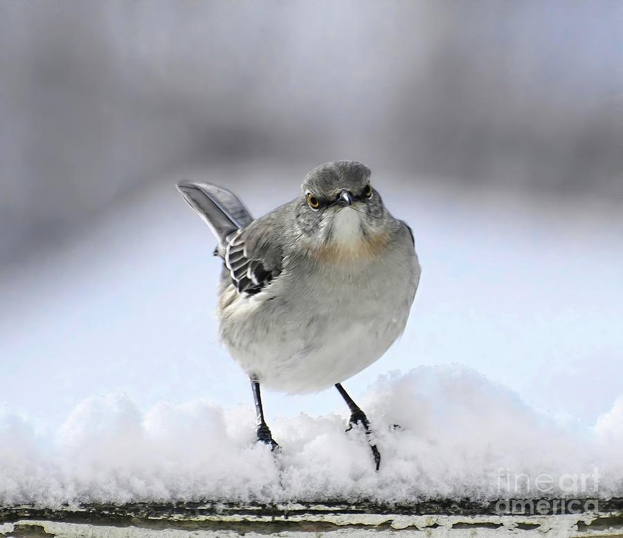Bird Expressions - Mockingbird With Attitude Photograph