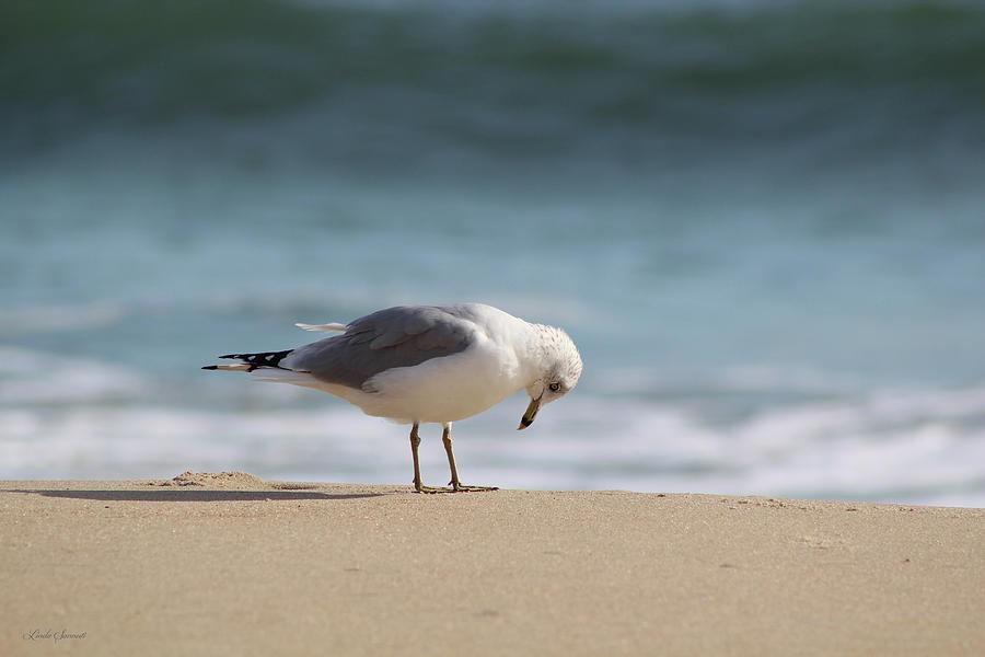 Bird Of Pray by Linda Sannuti