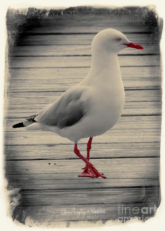 Bird on a Boardwalk by Chris Armytage