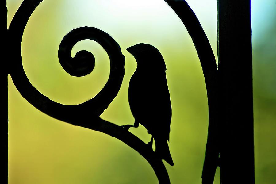 Bird On Ornamental Iron Photograph