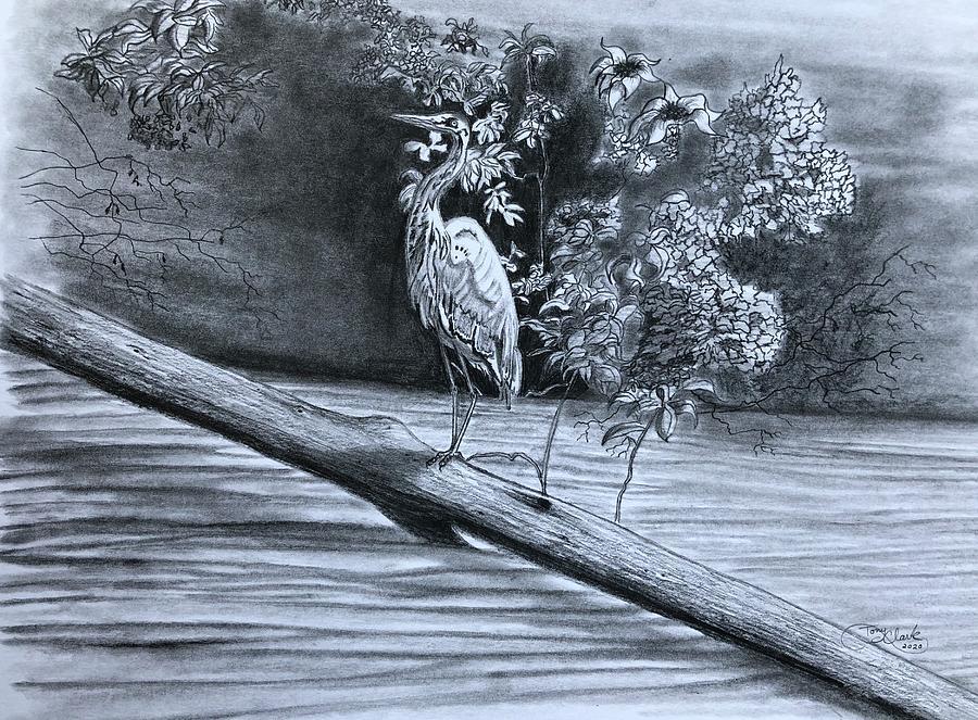 Bird Watching Drawing