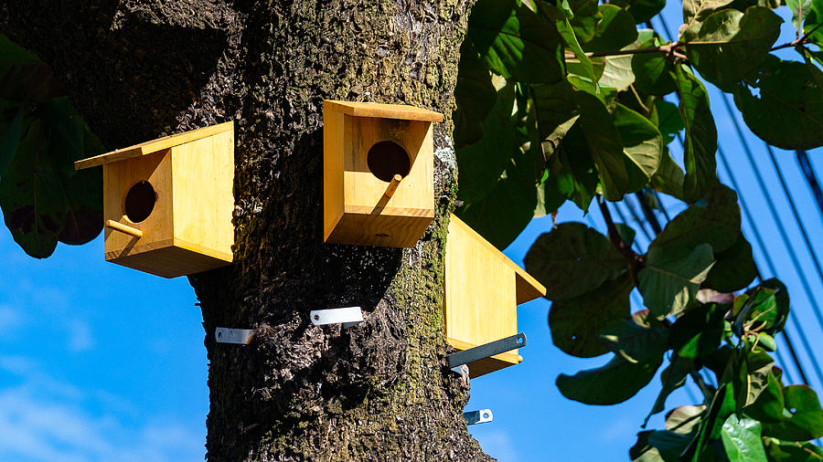 Birdhouses in a tree inside the big city. Photograph by CRMacedonio