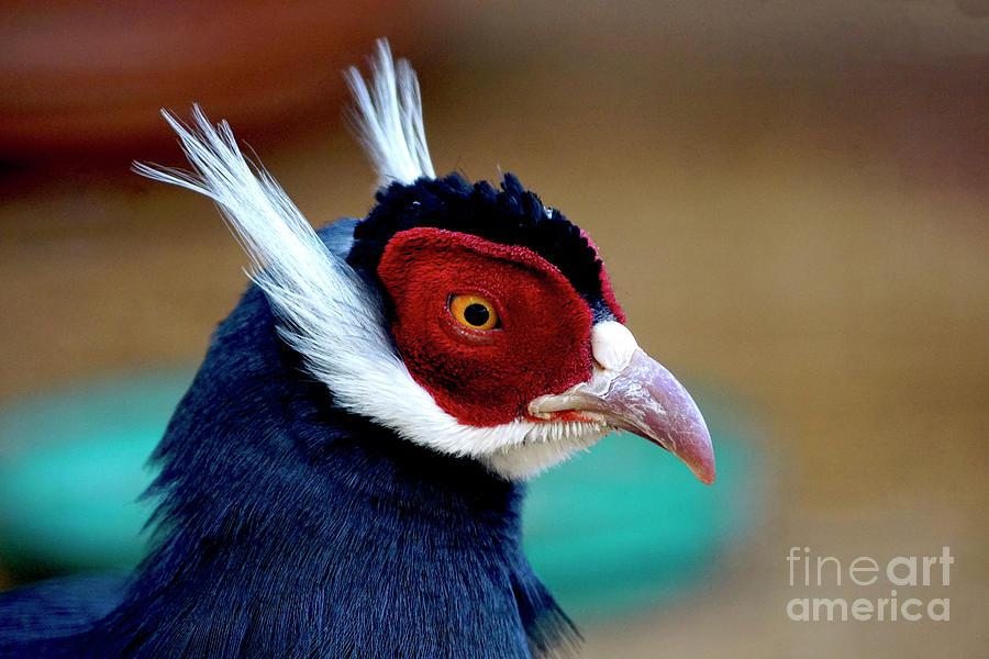 Birds 138 Photograph