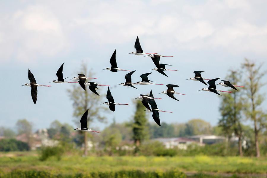 Birds in flock by Pietro Ebner