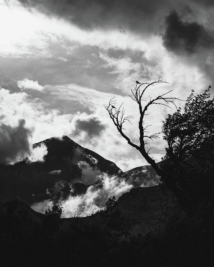 Black And White Photograph - Birds On A Tree In Mustang Nepal by Julius Thomas
