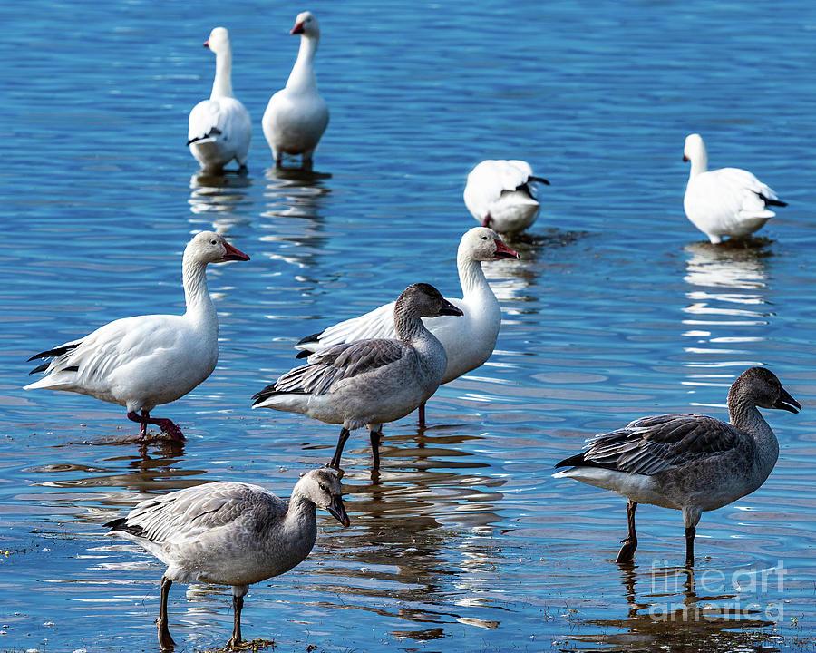 Birds on OBX by Dan Carmichael