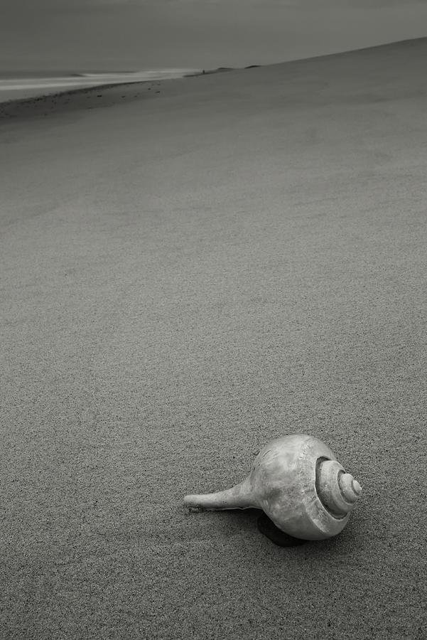 Shell Photograph - Black and White Artwork Shell on Beach by Dapixara Art