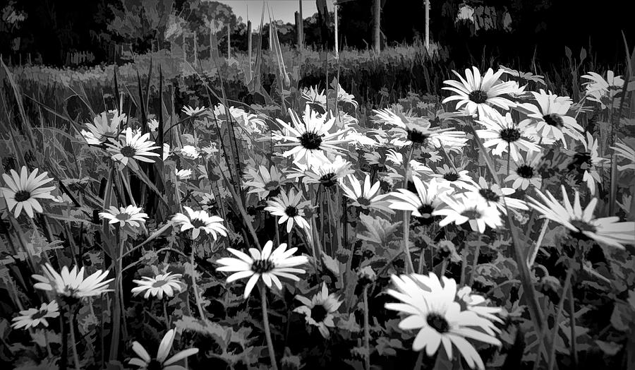 Black And White Carpet Of Wild Field Daisies by Joan Stratton