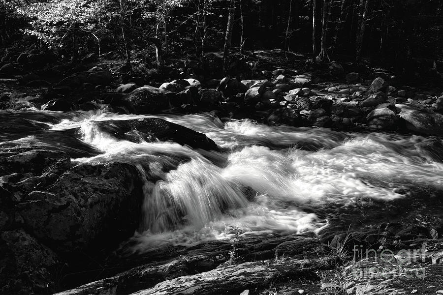 Little River Photograph - Black And White Little River by Phil Perkins