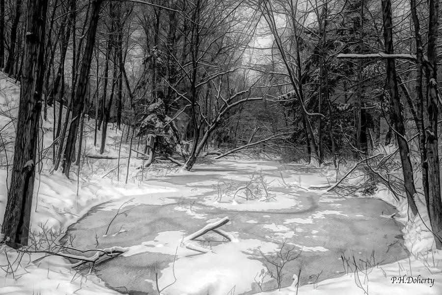 Black And White Pond Digital Art