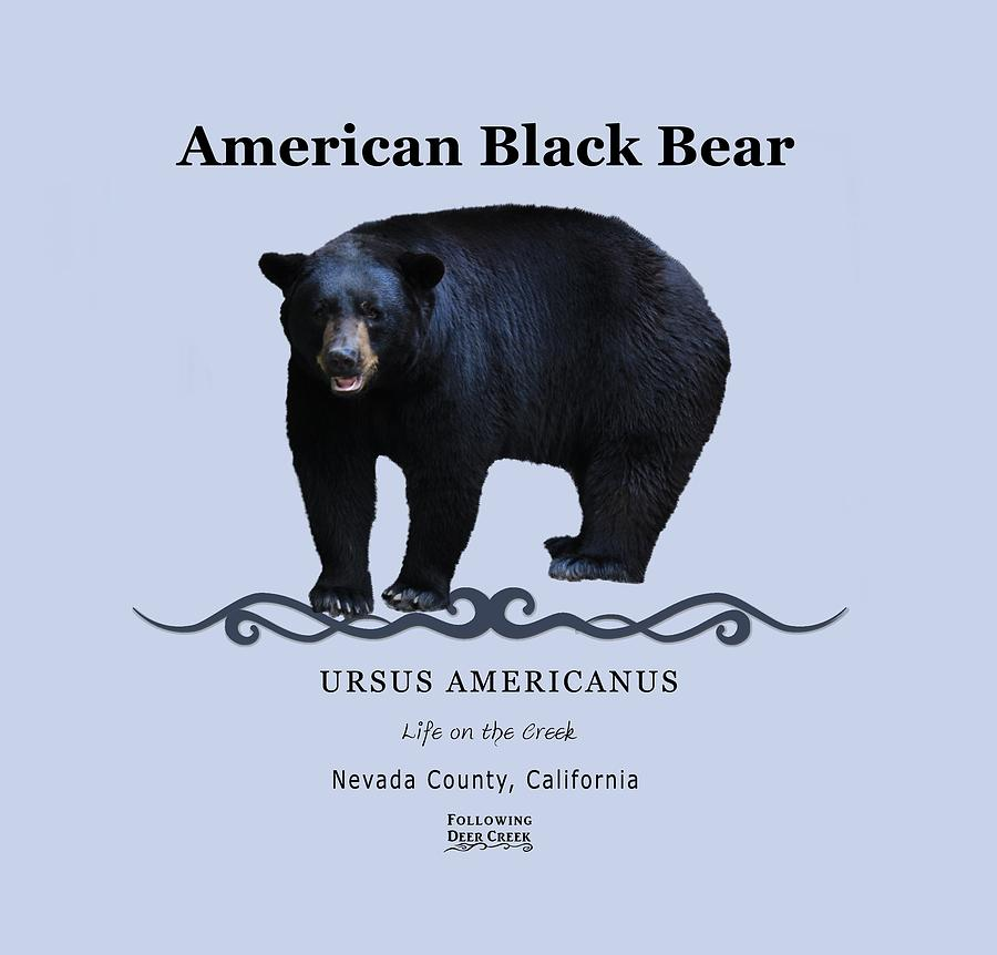 Black Bear by Lisa Redfern
